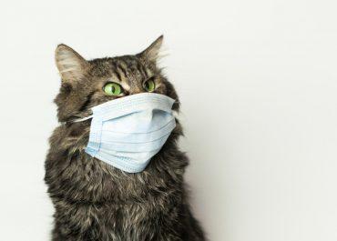 Кошки больше собак подвержены коронавирусу, но паниковать не стоит